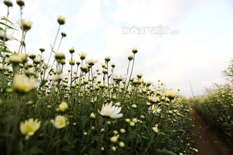 Kết quả hình ảnh cho hình động hoa cúc trong mưa