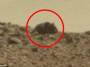 Phi thường - kỳ quặc - Phát hiện chuột khổng lồ trên sao Hỏa