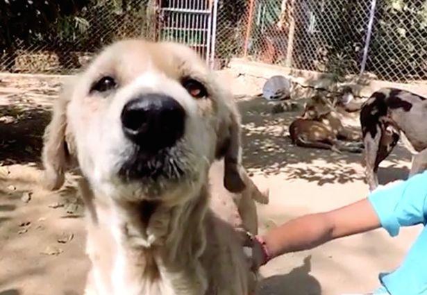 """Clip: Giải cứu chú chó đáng thương có lông bị """"hóa đá"""" - 2"""