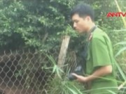 Video An ninh - Nghi án thanh niên vượt rào trộm ngan bị điện giật chết