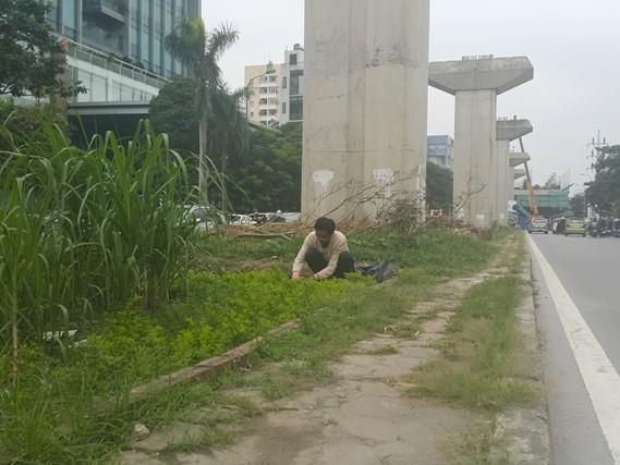 HN: Người dân trồng... cây cảnh dưới đường sắt trên cao - 2
