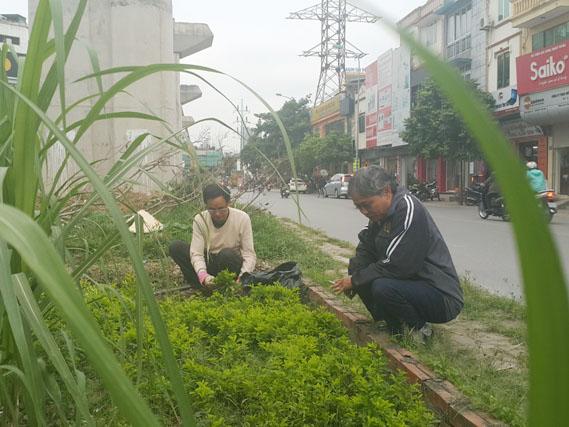 HN: Người dân trồng... cây cảnh dưới đường sắt trên cao - 7