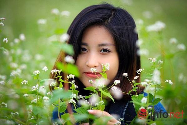 Cận cảnh vườn hoa tam giác mạch giữa lòng Hà Nội - 2