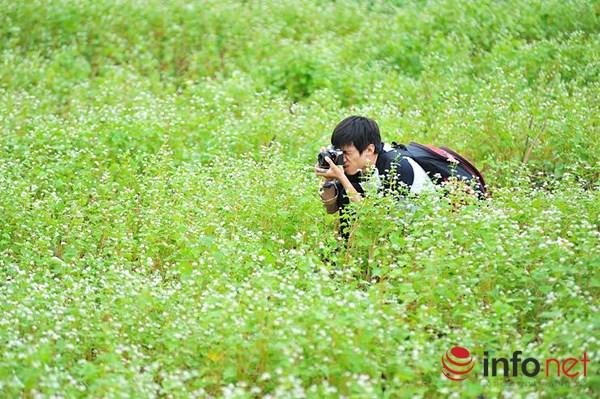 Cận cảnh vườn hoa tam giác mạch giữa lòng Hà Nội - 10