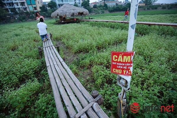 Vườn tam giác mạch giữa Thủ đô phải đóng cửa - 6