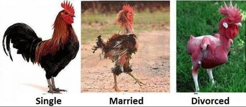 Chỉ dành cho ai đã kết hôn hoặc... chưa kết hôn - 6
