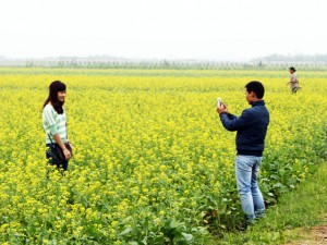 """Tin tức trong ngày - """"Đồng cải đẹp nhất Việt Nam"""" vào mùa hoa nở"""
