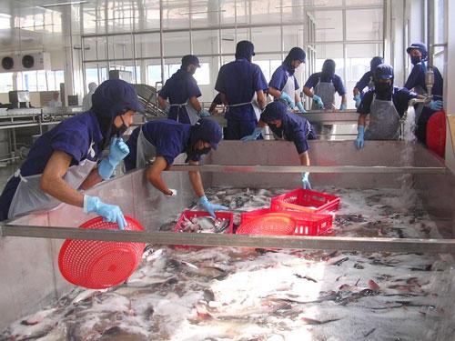 Phản đối Mỹ giám sát cá tra, ba sa của Việt Nam - 1