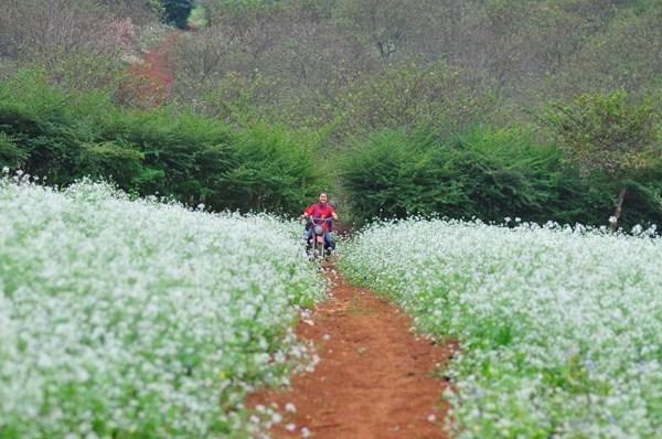 Những điểm ngắm hoa cải trắng tuyệt đẹp ở Mộc Châu - 3