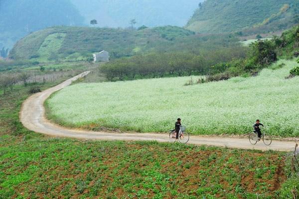 Những điểm ngắm hoa cải trắng tuyệt đẹp ở Mộc Châu - 4