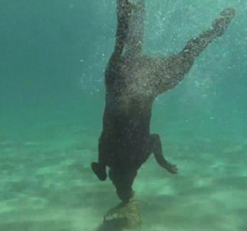 Clip: Phát sốt với chú chó biết lặn xuống biển bắt tôm - 2