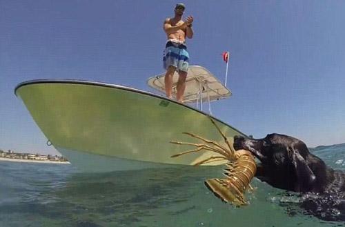Clip: Phát sốt với chú chó biết lặn xuống biển bắt tôm - 3