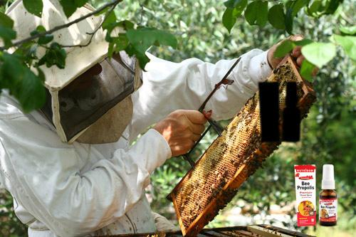Đừng mua thuốc, hãy nuôi ong - 1