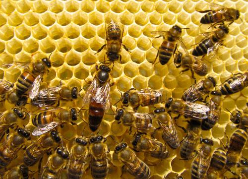 Đừng mua thuốc, hãy nuôi ong - 2