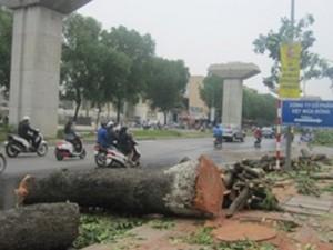Tin tức Việt Nam - Hà Nội: Chặt 28 cây xanh để thi công đường Vành đai 2