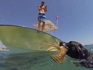 Bạn trẻ - Cuộc sống - Clip: Phát sốt với chú chó biết lặn xuống biển bắt tôm