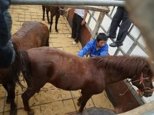 Tin tức trong ngày - Theo vó ngựa hạ sơn