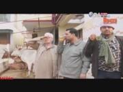 Video An ninh - Rợn người cách chữa bệnh ung thư bằng nước tiểu bò