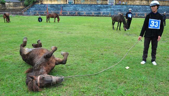 Ảnh: Khoảnh khắc chiến thắng của những nài ngựa nông dân - 1