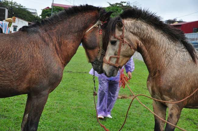 Ảnh: Khoảnh khắc chiến thắng của những nài ngựa nông dân - 2