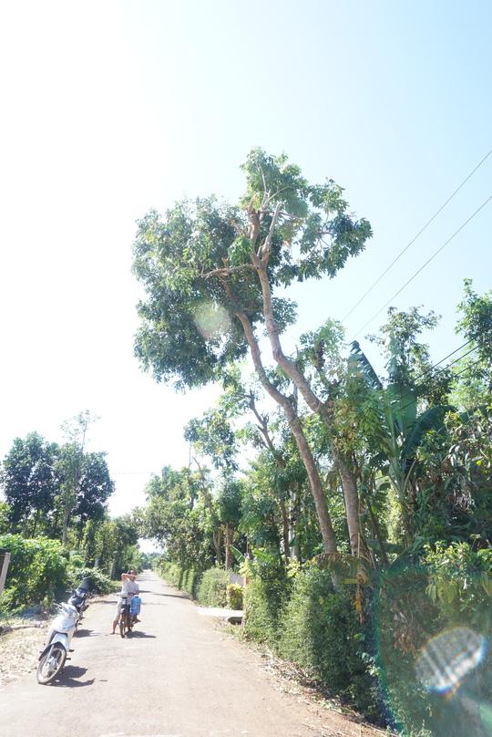 Một người bị điện giật dính chặt vào thân cây - 1