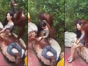 Mấy em khỉ này diễn sâu quá khiến cô gái hết hồn