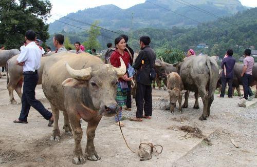 5 điểm du lịch Việt đừng bỏ lỡ trong tháng 12 - 2