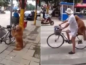 Giới trẻ - Mê tít chú chó thông minh ngồi trông xe cho chủ