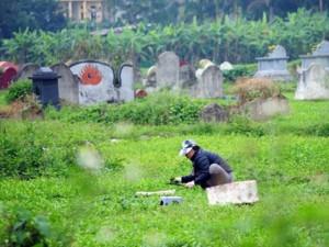 Tin tức trong ngày - HN: Ruộng rau xanh tốt giữa nghĩa địa nước đen đầy váng mỡ