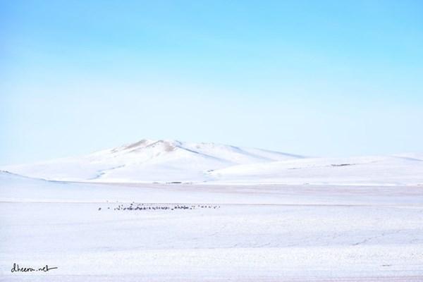 Mùa đông trắng trên thảo nguyên Mông Cổ - 1