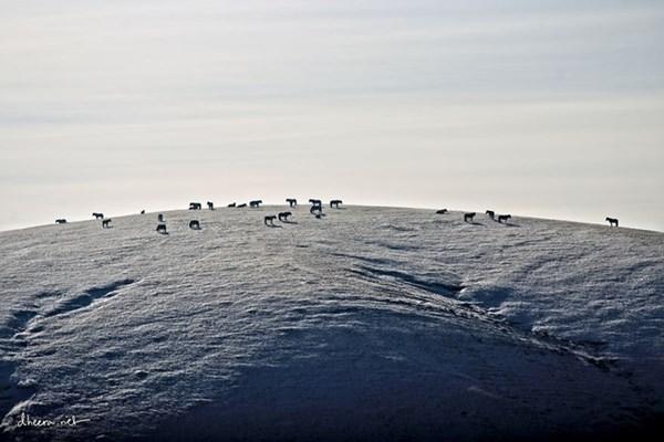 Mùa đông trắng trên thảo nguyên Mông Cổ - 10