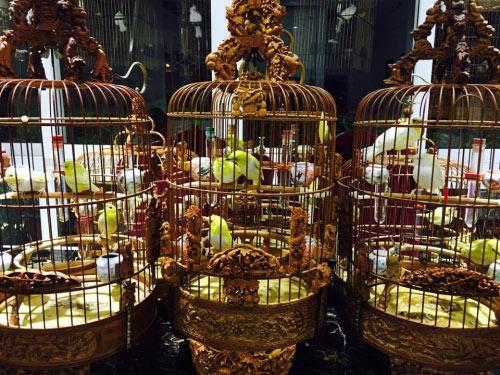 """Chim trăm triệu của """"vua chim màu"""" khiến dân chơi """"điên đảo"""" - 1"""
