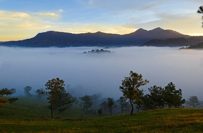 Sương Đà Lạt giống như một đặc ân của đất trời, chỉ cần phủ nhẹ lên vạn vật thì mọi thứ có một màu sắc bí ẩn.