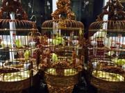 """Thị trường - Tiêu dùng - Chim trăm triệu của """"vua chim màu"""" khiến dân chơi """"điên đảo"""""""