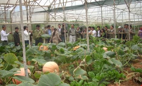 Chiêm ngưỡng những trái bí khổng lồ ở Đà Lạt - 3