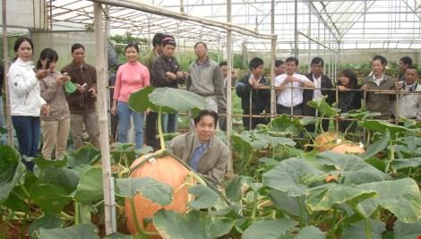 Chiêm ngưỡng những trái bí khổng lồ ở Đà Lạt - 5