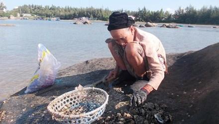Nghề đập hàu biển hái tiền ở Quảng Ngãi - 1