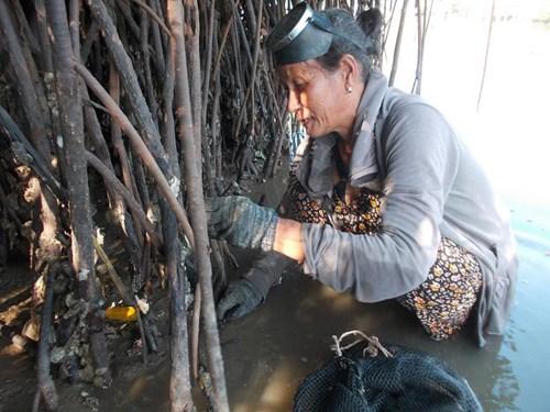 Nghề đập hàu biển hái tiền ở Quảng Ngãi - 3
