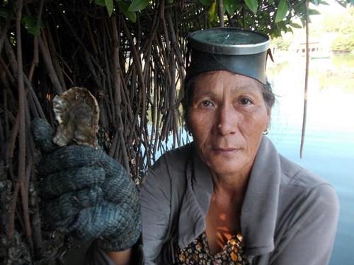 Nghề đập hàu biển hái tiền ở Quảng Ngãi - 6