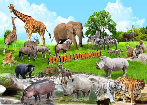 Vườn Xoài - Du lịch dã ngoại, nghỉ dưỡng và khám phá thiên nhiên kỳ thú - 4