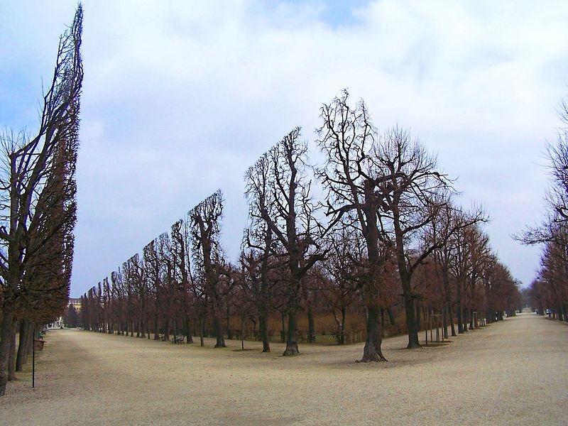 """""""Khu vườn quyền lực"""" ở di sản văn hóa Schönbrunn - 1"""