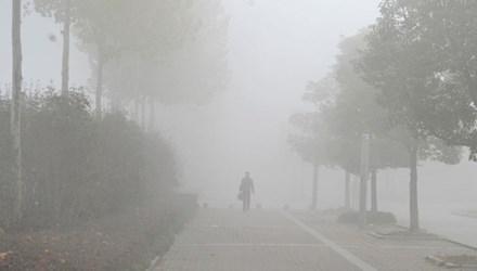 Lạc đường khi sang nhà hàng xóm vì... sương mù dày đặc - 1