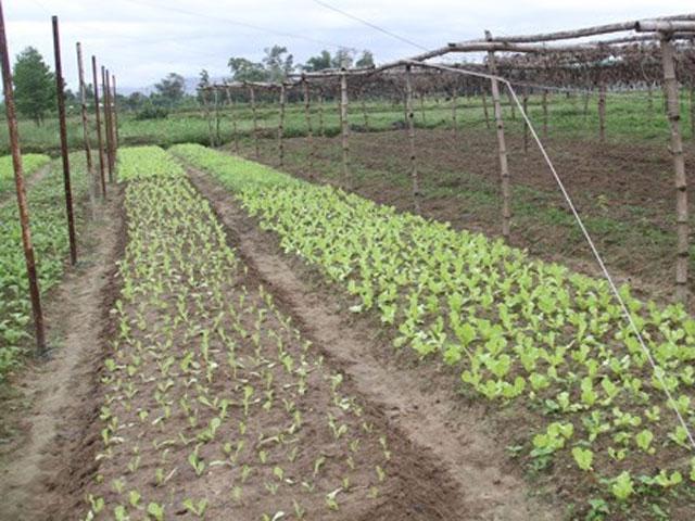 Đà Nẵng hủy phê duyệt quỹ đất dự án trồng rau của người TQ - 1