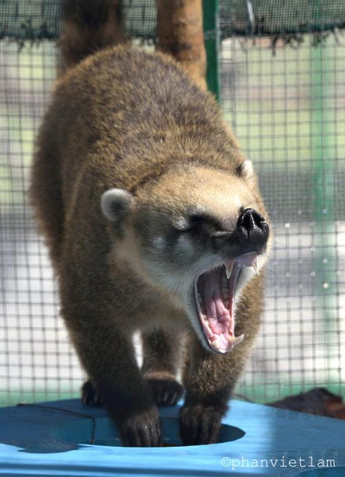 """Vinpearl Safari Phú Quốc đón thêm 200 thú """"cưỡi"""" chuyên cơ về từ Châu Phi - 7"""