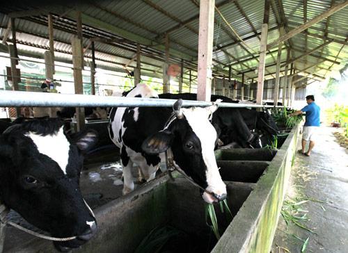 Vinamilk tổ chức tái ký hợp đồng trực tiếp nông dân chăn nuôi bò sữa - 3