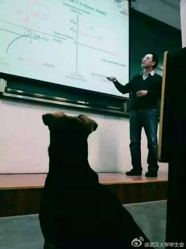 """Chó đi """"học đại học"""" ở Trung Quốc - 1"""