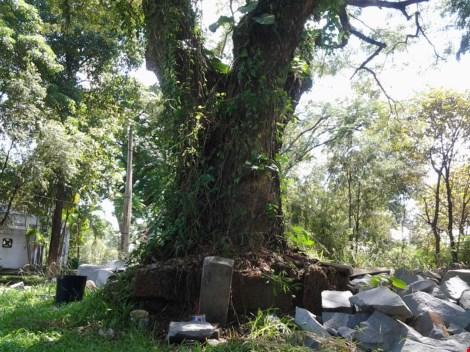 Bí ẩn những ngôi mộ kỳ lạ trên núi Bửu Long - 5