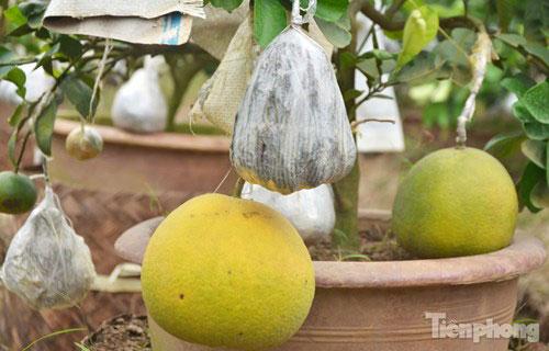 Ngắm vườn thập quả cực độc đáo của lão nông ở Thủ đô - 13