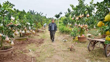 Ngắm vườn thập quả cực độc đáo của lão nông ở Thủ đô - 1
