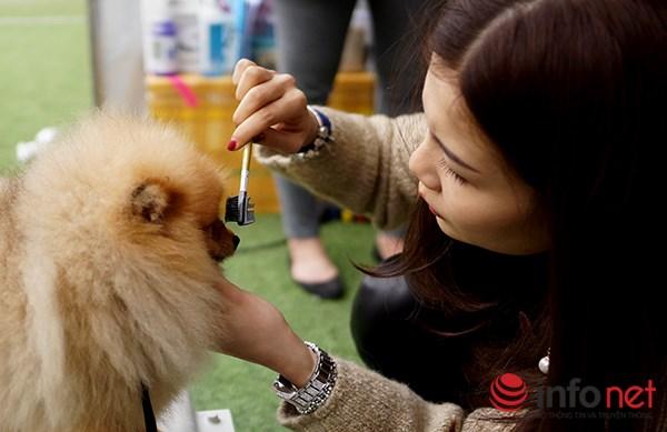 Kỳ công nghề trang điểm cho thú cưng - 2